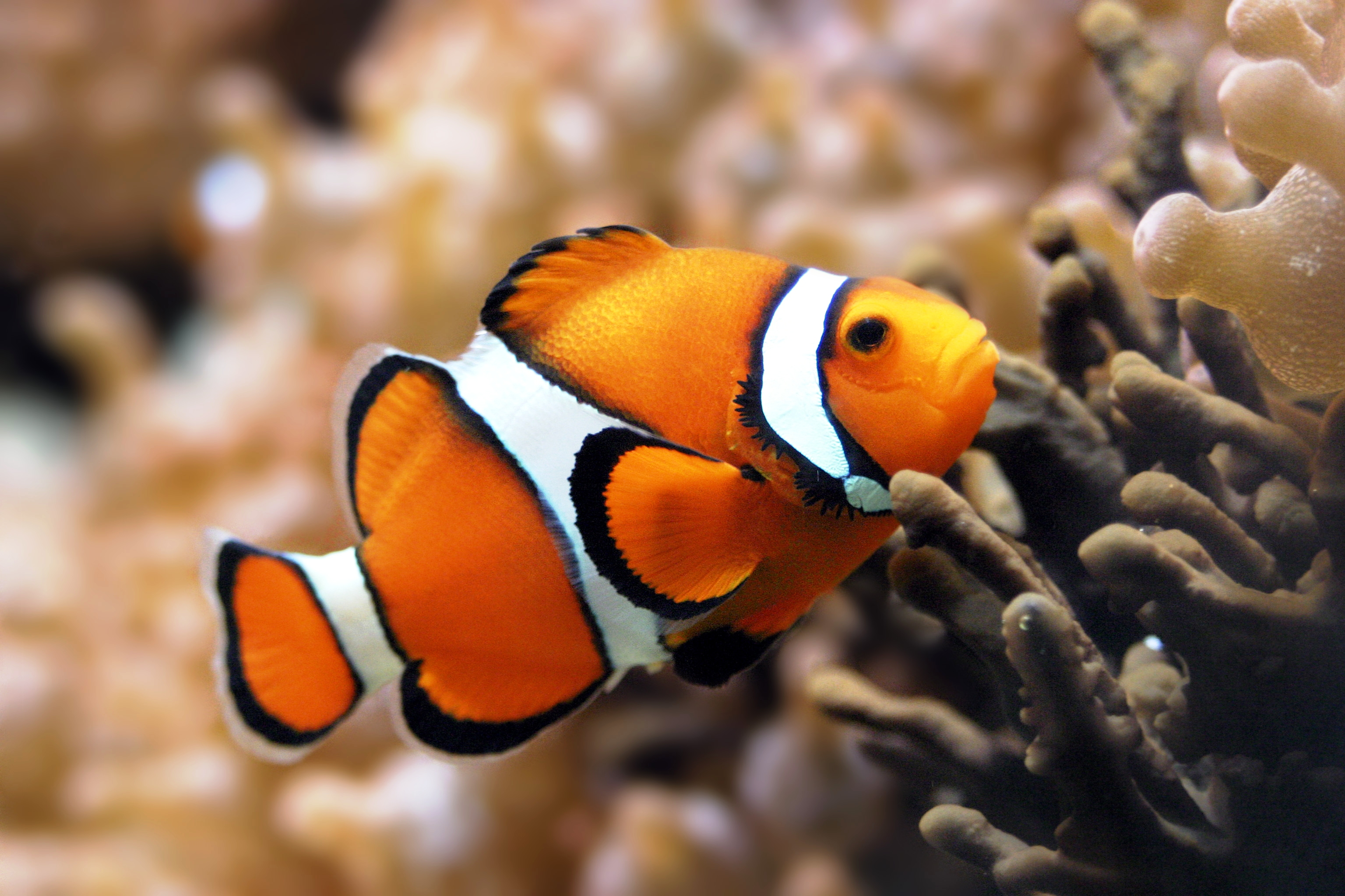 Clown fish jim 39 s world and welcome to it for Jims exotic fish