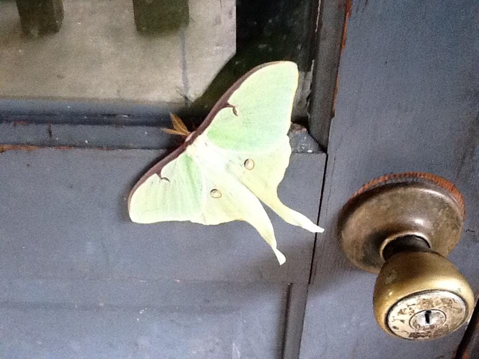 Jim's Nature Corner: Know Your Moths, Part 2